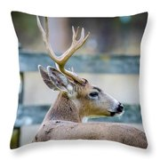 Black-tailed Buck Throw Pillow