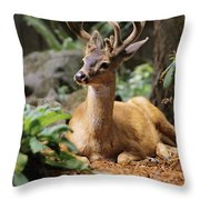 Black-tailed Deer Throw Pillow