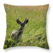Black-tailed Deer In Tall Meadow Grass Throw Pillow