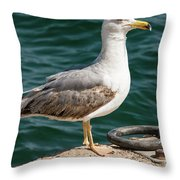 Black Tailed Gull On Dock Throw Pillow