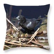 Black Tern On Nest Throw Pillow