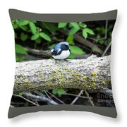 Black-throated Blue Warbler Throw Pillow