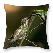 Black-throated Mango With Her Baby Hummingbird. Throw Pillow