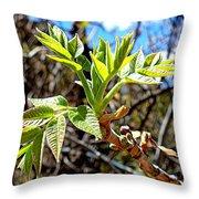 Black Walnut Spring Throw Pillow