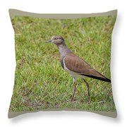 Black-winged Plover Throw Pillow