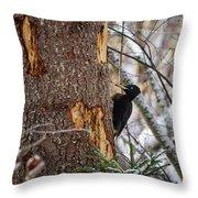 Black Woodpecker Peek Throw Pillow