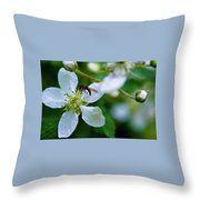 Blackberry Bzzzzz Throw Pillow