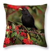 Blackbird Red Berries Throw Pillow
