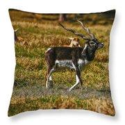 Blackbuck Throw Pillow