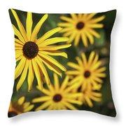 Blackeyed Susan Throw Pillow