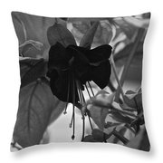 Blackie Fushia Throw Pillow