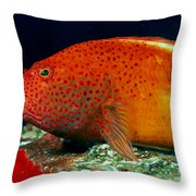Blackside Hawkfish Throw Pillow