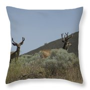 Blacktail Deer 2 Throw Pillow