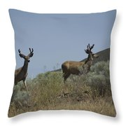 Blacktail Deer 3 Throw Pillow