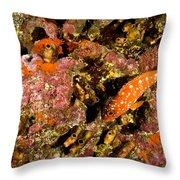 Blacktip Grouper Epinephelus Fasciatus Throw Pillow