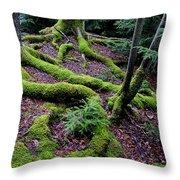 Blackwater Falls State Park Throw Pillow