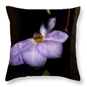 Blighted By Winter - 2 Throw Pillow