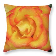 Blood Orange Rose Throw Pillow