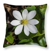 Blood Root Or Blood Wort Throw Pillow