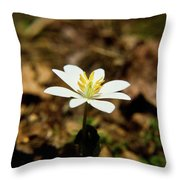Bloodroot 2 Throw Pillow
