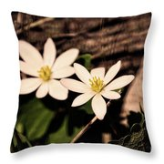 Bloodroot In Spring Throw Pillow