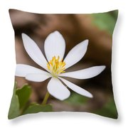 Bloodroot Wildflower Throw Pillow