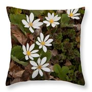 Bloodroot Wildflowers #1203 Throw Pillow