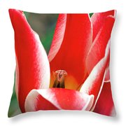 Bloom Of The Tulip Throw Pillow