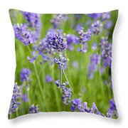 Blooming Lavendar Throw Pillow