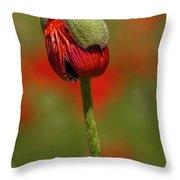 Blooming Orange Poppy Throw Pillow