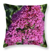 Blooming Pink Phlox Flowers In A Spring Garden Throw Pillow