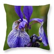 Blooming Purple Iris Throw Pillow