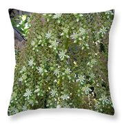 Blooming Succulent Plant. Big And Beautiful Throw Pillow