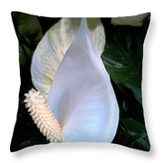 Blooming White Calla Lilies  Throw Pillow