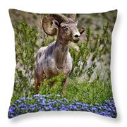 Blooms And Bighorn In Anza Borrego Desert State Park  Throw Pillow by Sam Antonio Photography