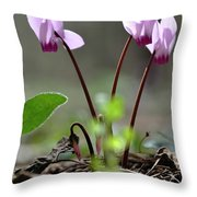 Blossom Of Cyclamens Throw Pillow