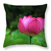 Blossoming Lotus Flower Closeuop Throw Pillow