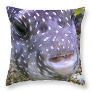 Blow Fish Close-up Throw Pillow