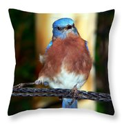 Blue And Brown Tanager Throw Pillow