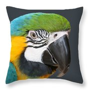 Blue And Gold Macaw Digital Freehand Painting Throw Pillow