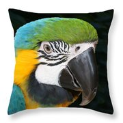 Blue And Gold Macaw Freehand Painting Square Format Throw Pillow