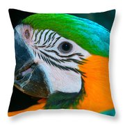 Blue And Gold Macaw Headshot Throw Pillow
