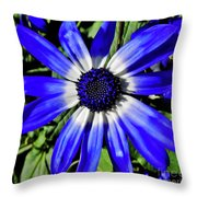 Blue And White African Daisy Throw Pillow