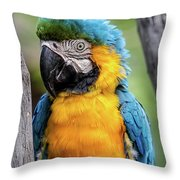 Blue And Yellow Macaw Portrait  Throw Pillow
