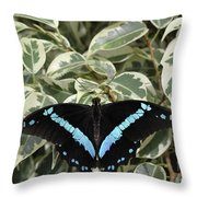 Blue-banded Swallowtail Butterfly Throw Pillow