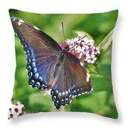 Blue Beauty 3 Throw Pillow