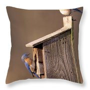 Blue Bird Couple Throw Pillow