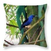 Blue Bird With A Curved Bill Throw Pillow