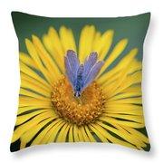 Blue Butterfly On Alpine Sunflower Throw Pillow