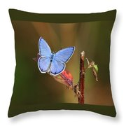 Blue Butterfly On Leaf Throw Pillow
